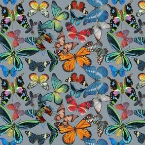 Butterfly Bounty on Gray