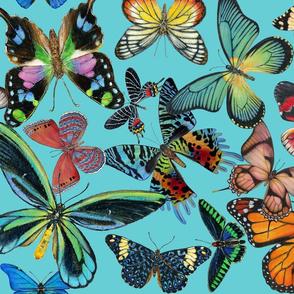 Butterfly Bounty on Aqua