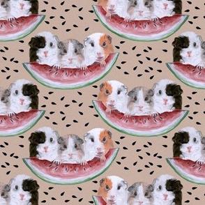 3 Guinea Pig Picnic