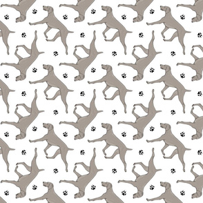 Trotting Weimaraner and paw prints - white