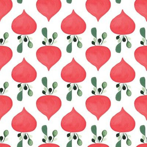 Rows of radishes in white
