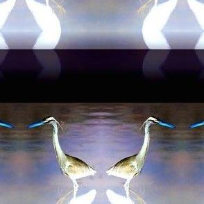 Night-Fishing Herons