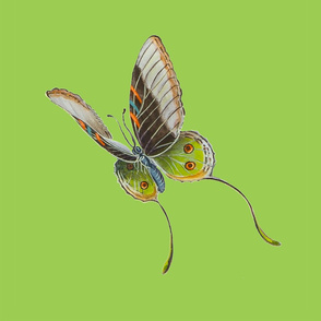 Jenoiserie_green_brown_and_orange_butterflyL