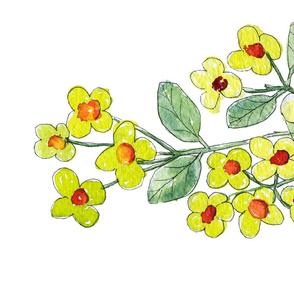 Hypericum berries 2