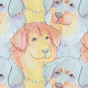 Watercolor Tibetan mastiff faces - large
