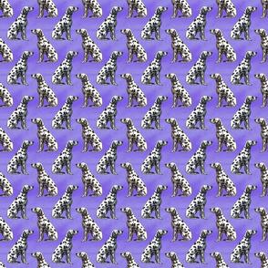 Small Sitting Dalmatians - purple