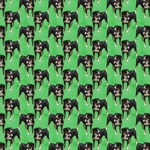 Posing Entlebucher mountain dog - small green