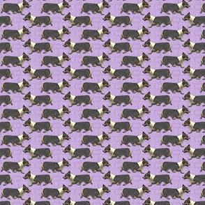 Trotting tri Pemmies - small purple