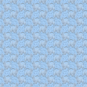 Small Posing American Eskimo dog - blue