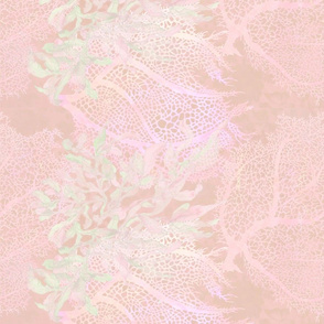 'inside-a-sea-shell' pink II