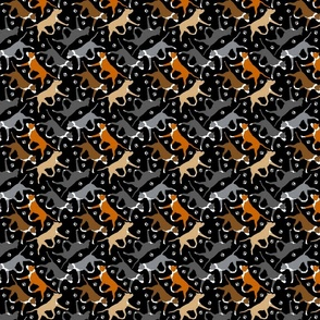 Tiny Trotting American Staffordshire Terriers - black