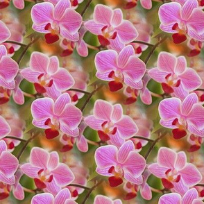 orchids in pink - painting effect