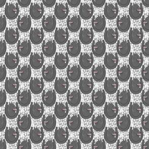 Schipperke horseshoe portraits - small