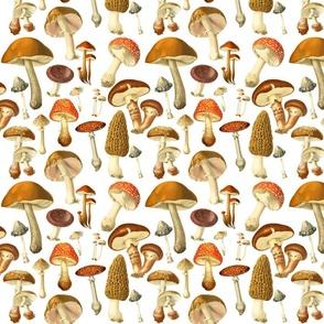 vintage botanical fungus