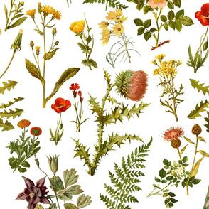vintage_botanical_wildflowers lg.