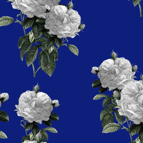 Redoute' Roses ~ Riot of  White Blooms on Bandy Blue ~ Special Version