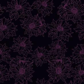 purple mums on black background