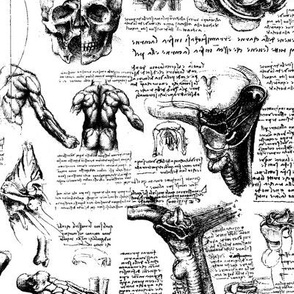 Da Vinci's Anatomy Sketchbook // Small
