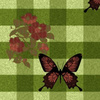 607279-plbutterflies2butterflygingham-by-pendraia