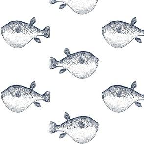 Navy blowfish blow fish puffer fish on white