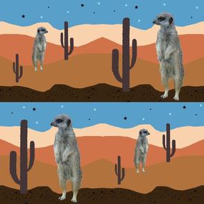 Desert Meercats