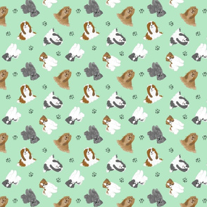 Tiny Shih Tzus - green