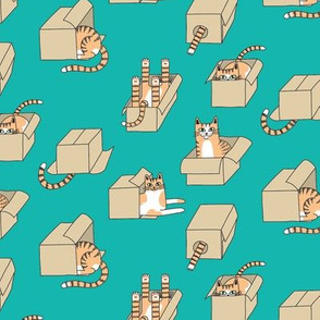 cats in boxes in teal