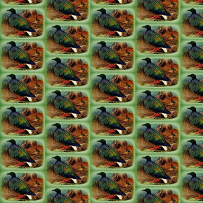 Nicobar pigeon (Baker) 1