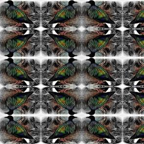Nicobar pigeon (Baker) 3