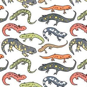 Salamanders illustration