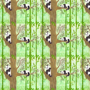 Minshan Mountain Pandas