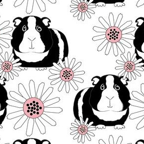 guinea-pigs-and-daisies-black white pink