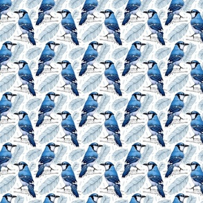 Blue Jay smaller scale