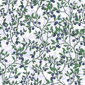 New Blueberries_White