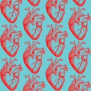 Anatomic Love