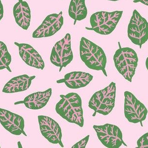Fittonia Leaves