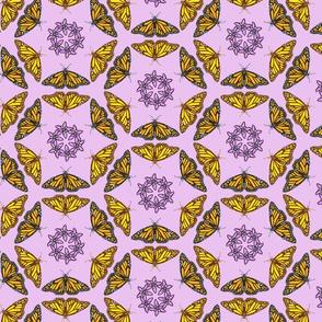 Monarch Butterflies & Milkweed Flower