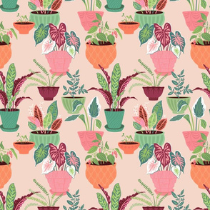 House Plants: Pink