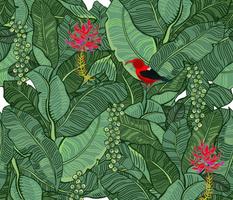 Hawaiian Rainforest I'iwi Bird Sighting