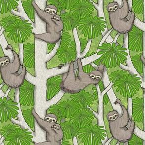 Rainforest Sloths
