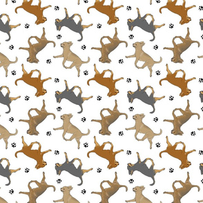 Trotting smooth coat Chihuahuas and paw prints - white