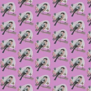 pink_bullfinch