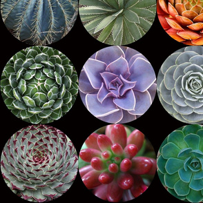Succulent Circles - large black