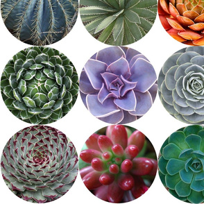 Succulent Circles - large white