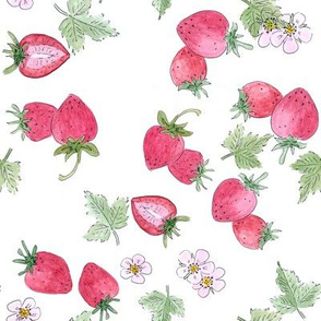 Watercolor . Strawberry on a white background .