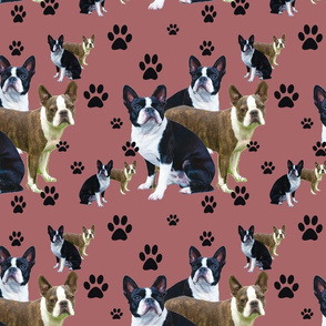 Boston Terrier and Pawprints