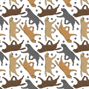 Trotting Labrador Retrievers and paw prints - white