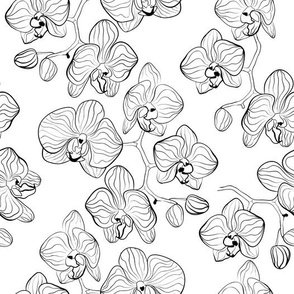 Orchid white . Feather ink .