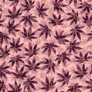 Purple Indica Dream