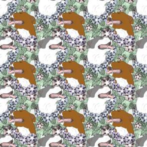 Floral American Pit Bull Terrier portraits C